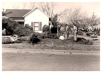 006 Tree Removal 1955