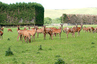 Red Deer Farm 3